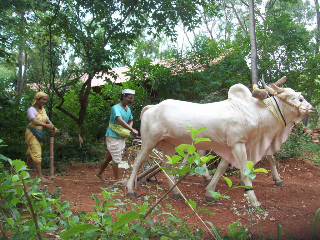 Typical village scene, featuring a farmers and bullocks
